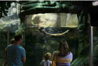 Family Pack to Oklahoma Aquarium (JENKS, OK) Item Number 109